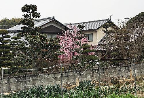 yamanoya2017030606